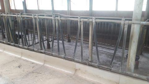Sonstige Aufstallung, Fangfressgitter für Rinder
