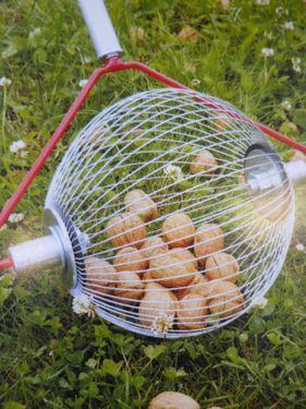 Feucht Rollblitz Apfel mit Holzstab