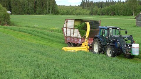 Egyéb ELHO zöldtakarmány-betakarító gép