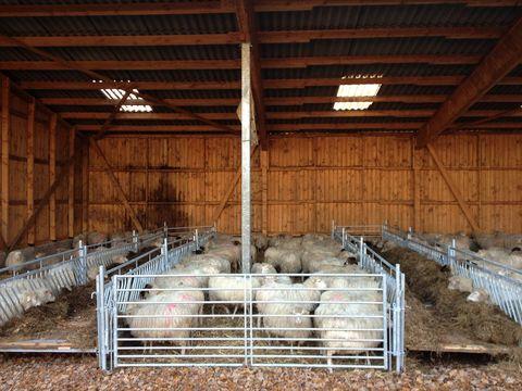 Veno Futtergatter, Aufstallung, Schafe und Ziegen