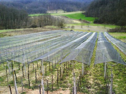Sonstige Zaštita vinograda od TUČE