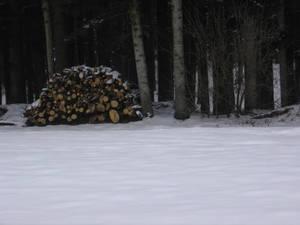 Holzhaufen gerichtet