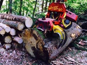 Woody 60(Durchforstung) :)
