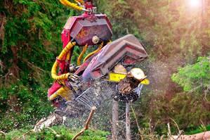 Woody 50 Harvesterkopf lässt die Späne fliegen!