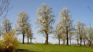 Baumgarten im Frühjahr
