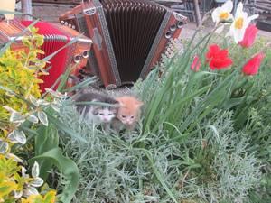Kätzchen auf Frühlingstour