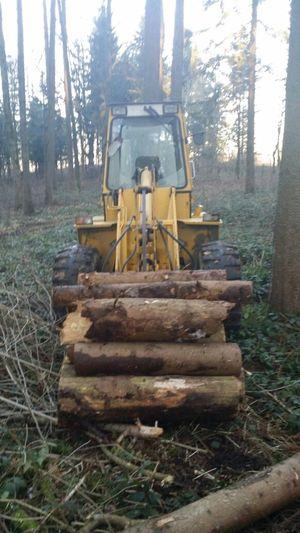 Holz macha im Wald