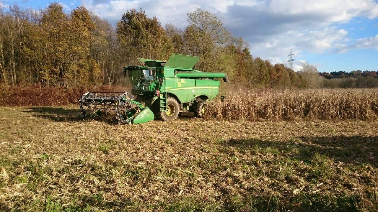 Käferbohnen Ernte mit Raps Gebiss! Mais dreschen - Erntezeit