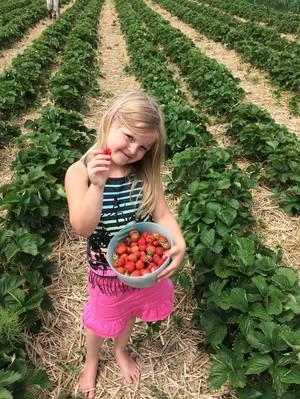 Erdbeerenernte- die beste Ernte <3