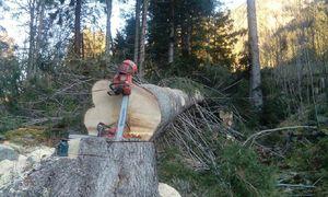 114 cm dicker Baum vs. huspvarna