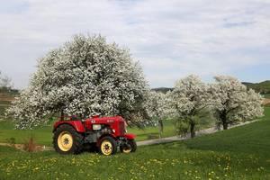 Birnenblüte im Fragnerland -