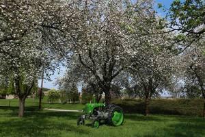 Apfelblüte anno dazumal...