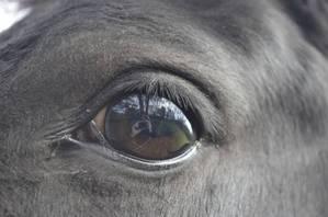 Im Auge des Pferdes gespiegelt