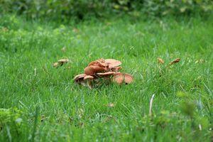 Pilze auf der Weide