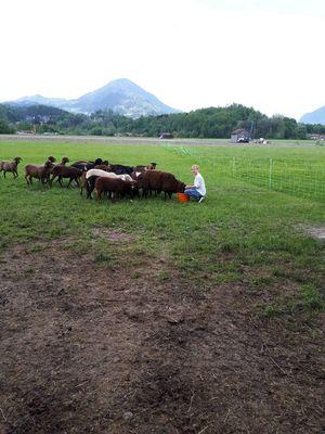Mei Maus und de Schafe