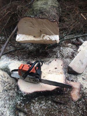 Käferholz machen