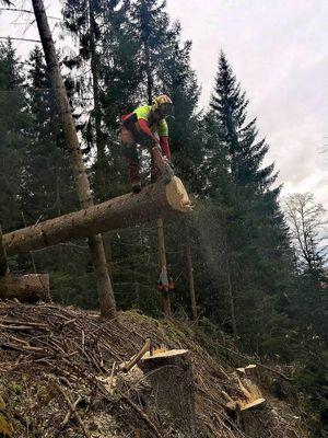 Waldarbeit Kärnten
