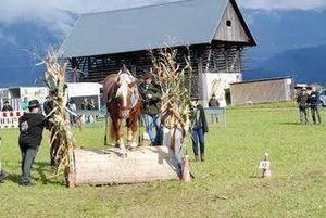 Pferd geschiklich.s fahren Feitritz im Gailtal!