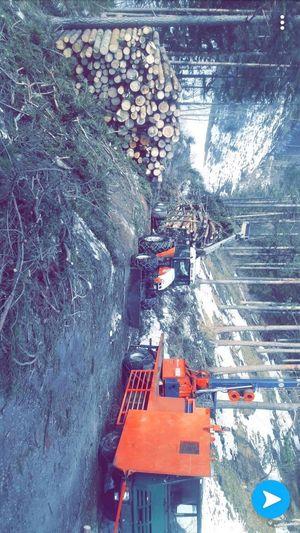 Waldarbeit- Sturmholzernte