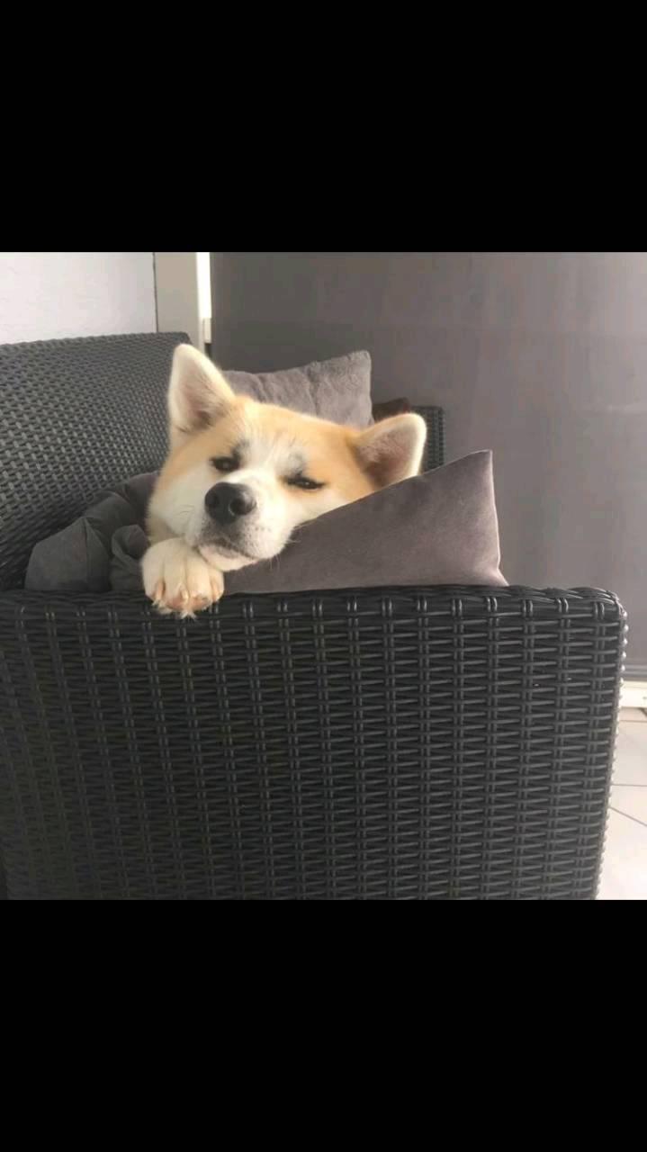 Mei Hund