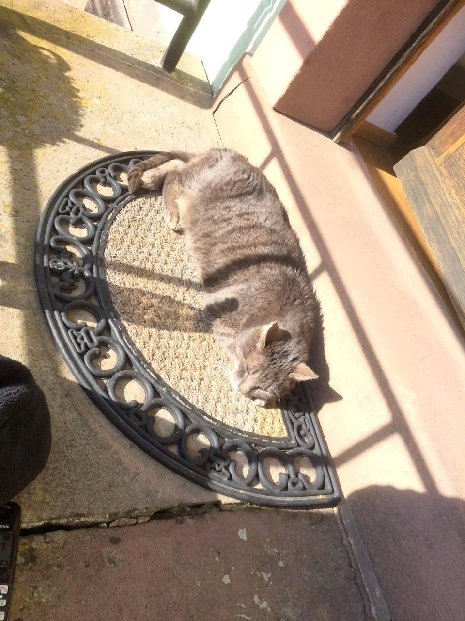 Mein Kater nimmt ein Sonnenbad
