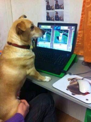 Lilly im Internet