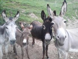 Unsere Eselfamilie
