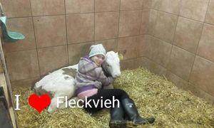 Fleckvieh