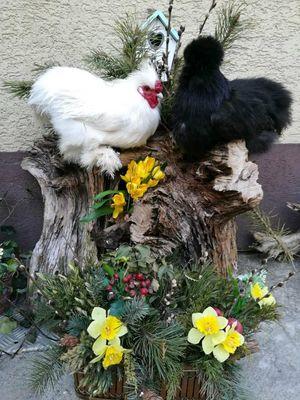 Seidige Frühlingsgrüße