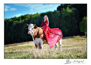 Das Glück der Erde liegt auf dem Rücken der Kühe