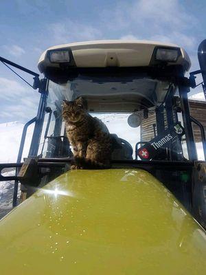 Katze auf hürlimann