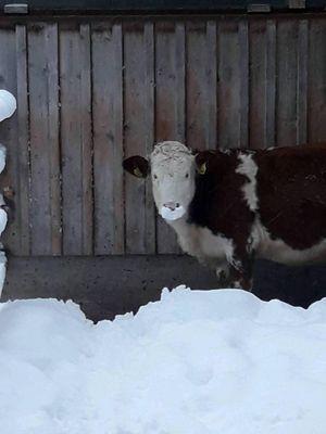 Sara im Winter