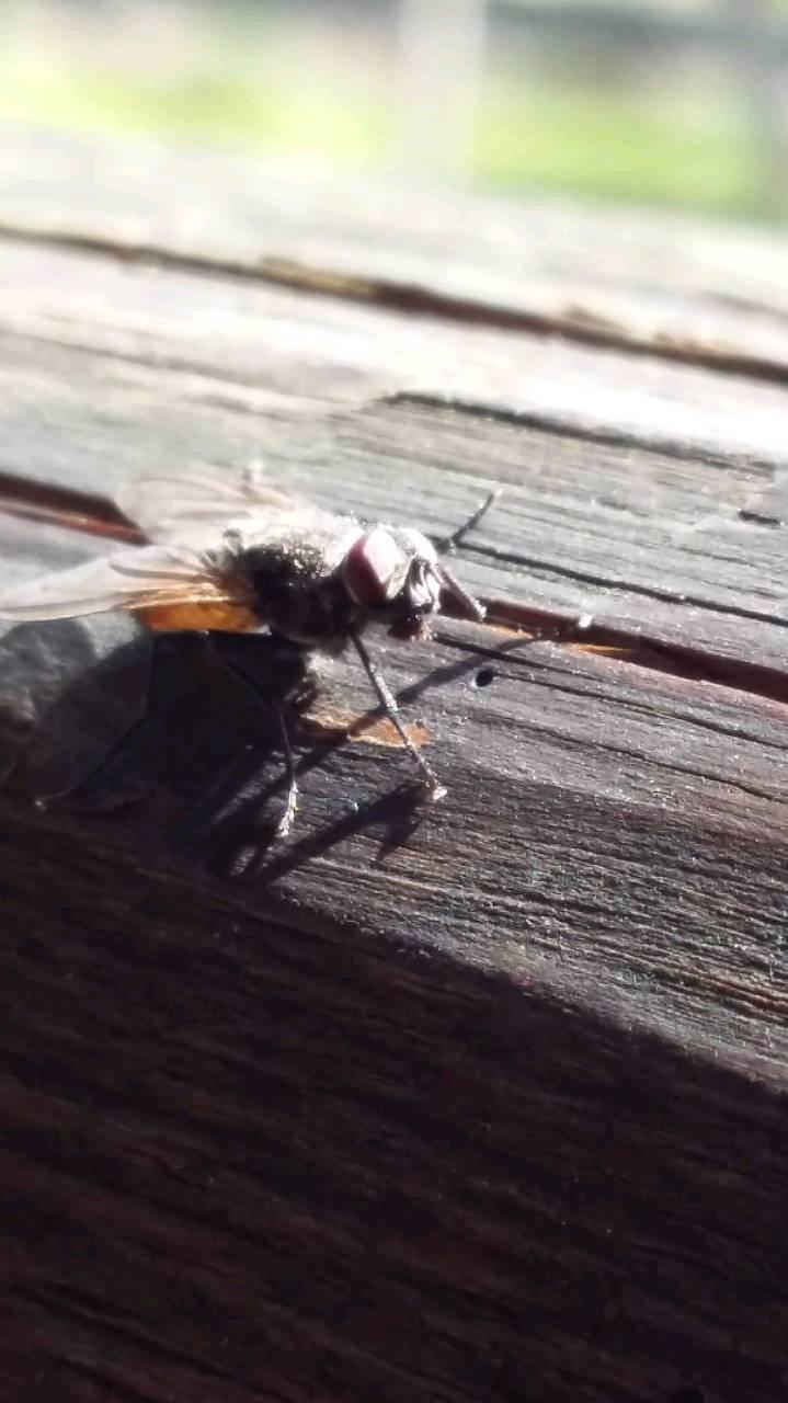 Erste Fliege