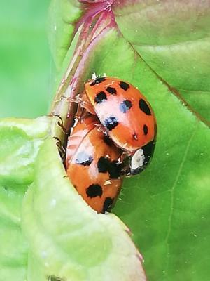 Das ist Käfer Liebe!!!!!!