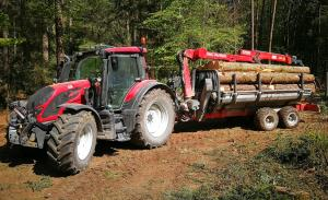 Käferholz beseitigen