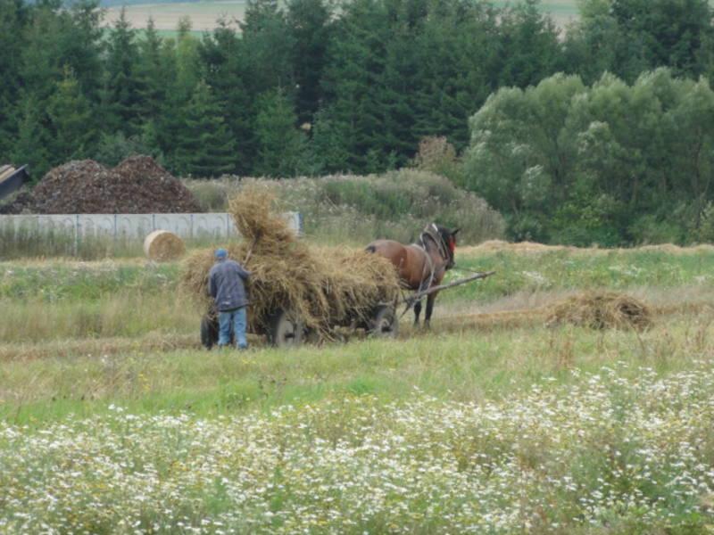Ernte in Polen