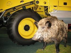 Ein Schwein!!!