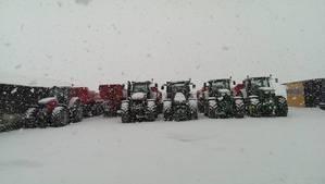 Meine Buidogs im Schnee