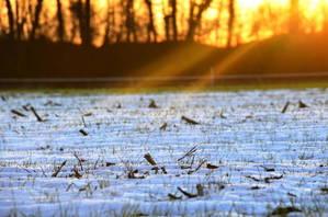 Sonnenuntergang über schneebedecktem Feld