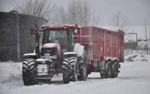 Raubkatze im Schnee