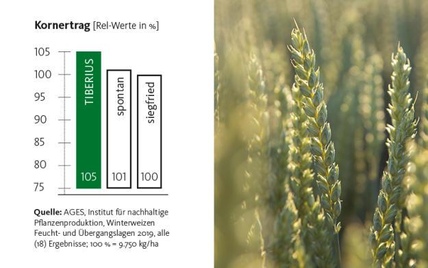 900 kg Mahlweizen TIBERIUS [4] (ca. 5 ha)